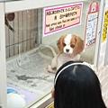 亞亞的美國村寵物拜訪 (24).jpg