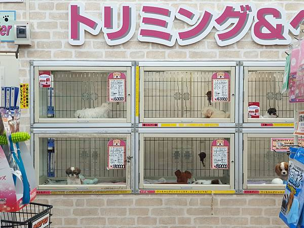 亞亞的美國村寵物拜訪 (28).jpg