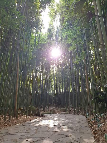 亞亞的豆留森林 (4).jpg