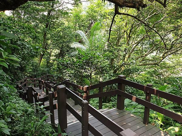 亞亞的登山紀行《虎山自然步道》 (7).jpg