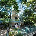 亞亞的熱帶雨林溫室 (7).jpg