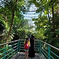 亞亞的熱帶雨林溫室 (8).jpg