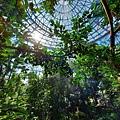 亞亞的熱帶雨林溫室 (9).jpg