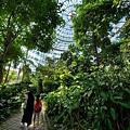 亞亞的熱帶雨林溫室 (10).jpg