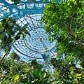 亞亞的熱帶雨林溫室 (12).jpg