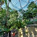亞亞的熱帶雨林溫室 (13).jpg