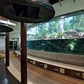 亞亞的熱帶雨林溫室 (16).jpg