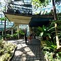 亞亞的熱帶雨林溫室 (15).jpg