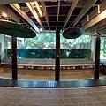 亞亞的熱帶雨林溫室 (20).jpg