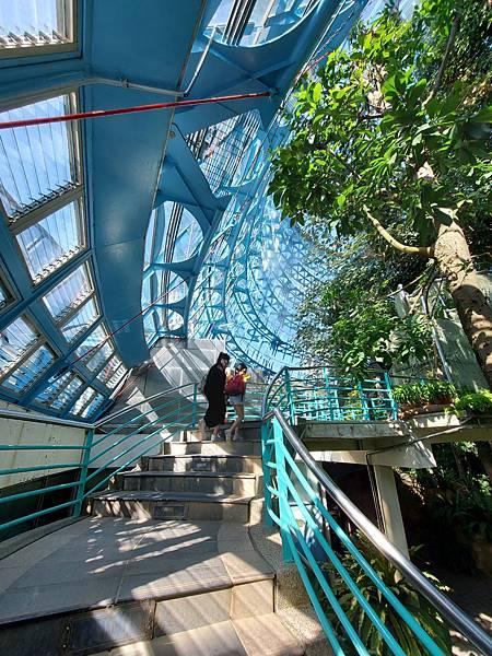 亞亞的熱帶雨林溫室 (21).jpg