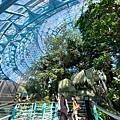 亞亞的熱帶雨林溫室 (22).jpg