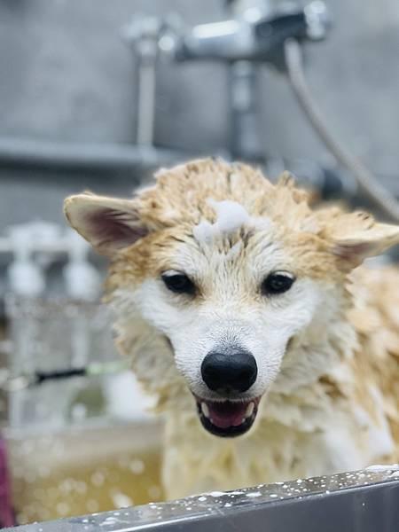 マル的洗澡 (2).jpg