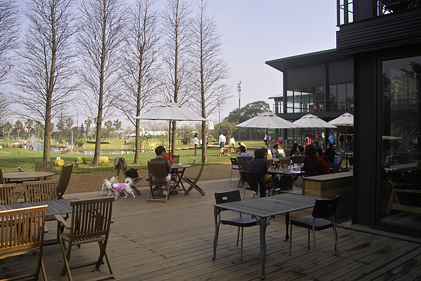 平鎮綠風草原餐廳+枯樹+湖.jpg
