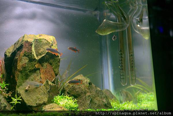 fish (15).jpg
