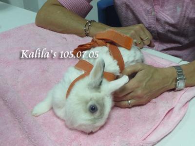 兔子TTouch6