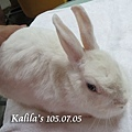 兔子TTouch8
