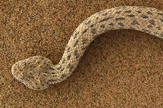 南方:蛇的教導s