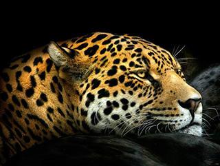 西方:美洲豹的教導2s