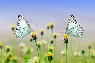 butterfly-S.jpg