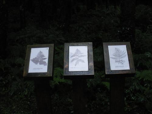 植物介紹看板