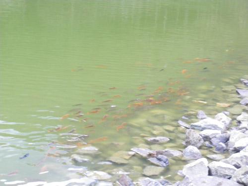 明池風景10