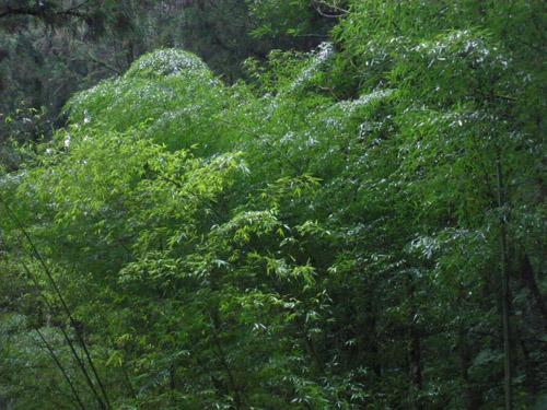 明池風景11