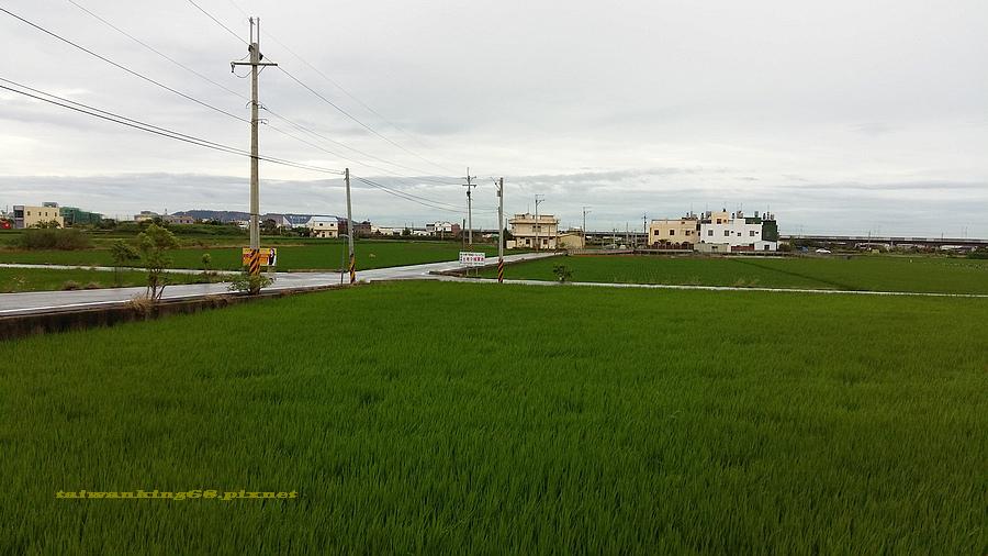 苑裡貓熊彩繪田_wujipixnet