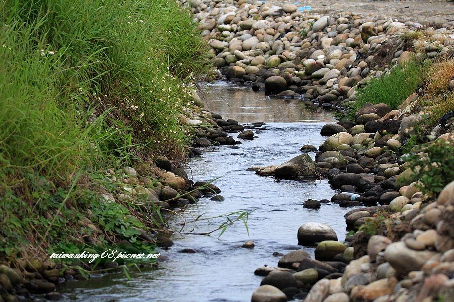 大甲溪河床的自然生態