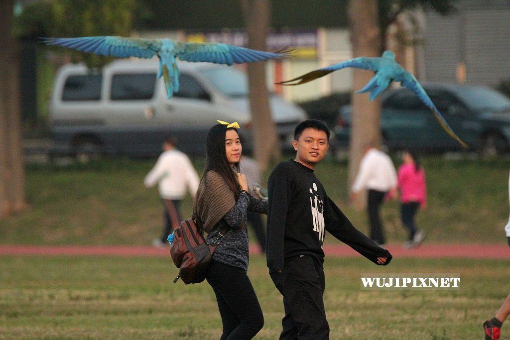 元旦在廣場上玩鳥的人