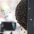 """這才叫一窩""""蜂"""""""