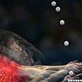 [男子桌球] 中國選手 張繼科
