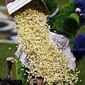 Phillie Phanatic 用爆米花幫球迷洗頭