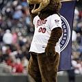 明尼蘇達雙城 T.C. Bear
