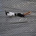 紐西蘭球員娛樂觀眾,在雨中表演滑壘