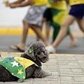 巴西 vs. 墨西哥