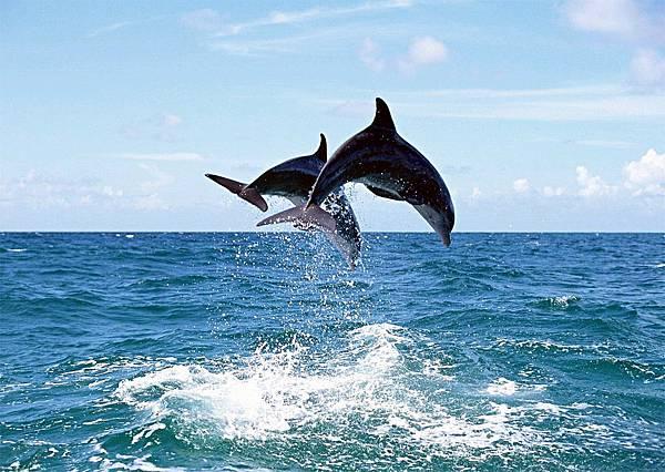 海豚3.jpg