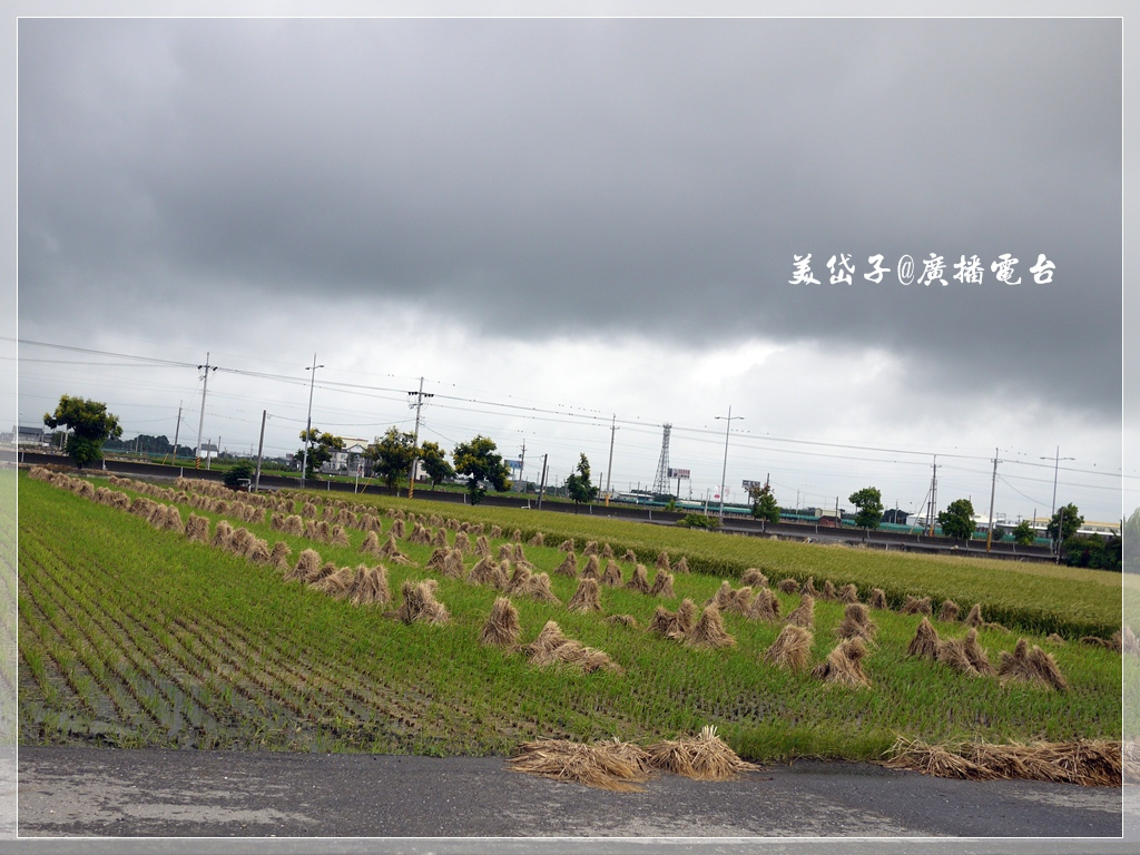 虎尾貓咪小學堂1.JPG
