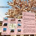 西港金砂花旗木6.JPG