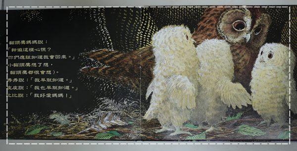 小貓頭鷹5.JPG