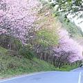 武陵櫻花季 (30)