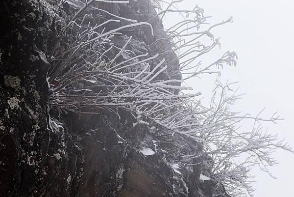 雪 (31).jpg