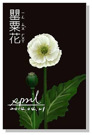 SPRIL-花草系列畫冊-罌粟花