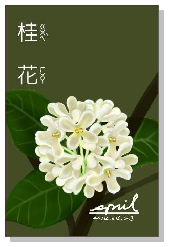 SPRIL-花草系列畫冊-桂花