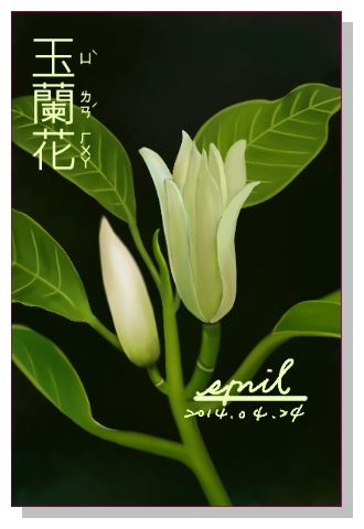 SPRIL-花草系列畫冊-玉蘭花