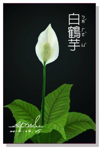 SPRIL-花草系列畫冊-白鶴芋