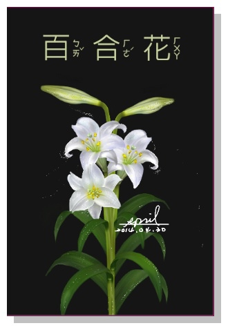 SPRIL-花草系列畫冊-百合花