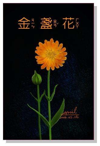 SPRIL-花草系列畫冊-金盞花