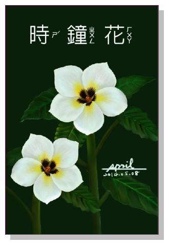 SPRIL-花草系列畫冊-時鐘花