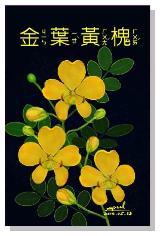 spril-花草系列畫冊-金葉黃槐