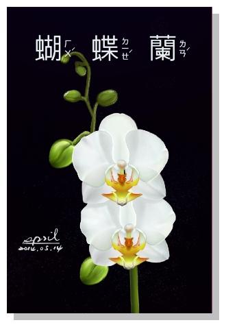 SPRIL-花草系列畫冊-蝴蝶蘭